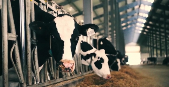 You May Have Wondered, Why Do We Drink Cows Milk Anyway?