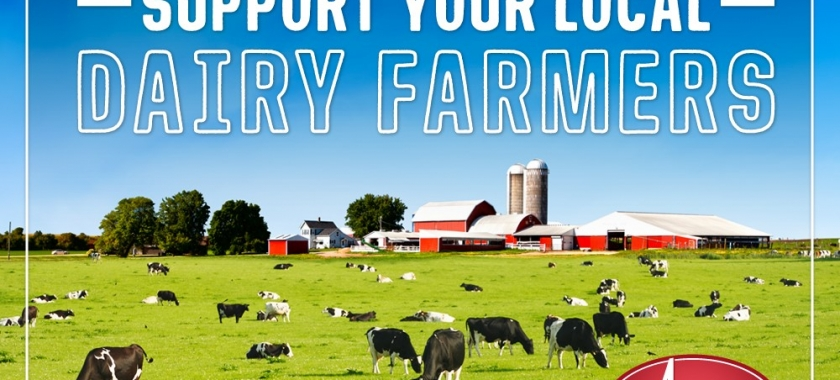 Support Local Dairy Farmers Everywhere – Buy Dairy